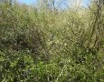 Téměř neprostupná zahrada s ovocnými stromy zarostlá nálety