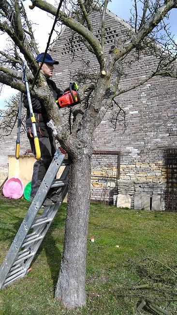 Řez ovocného stromu, odstraňování zaschlého pahýlu...