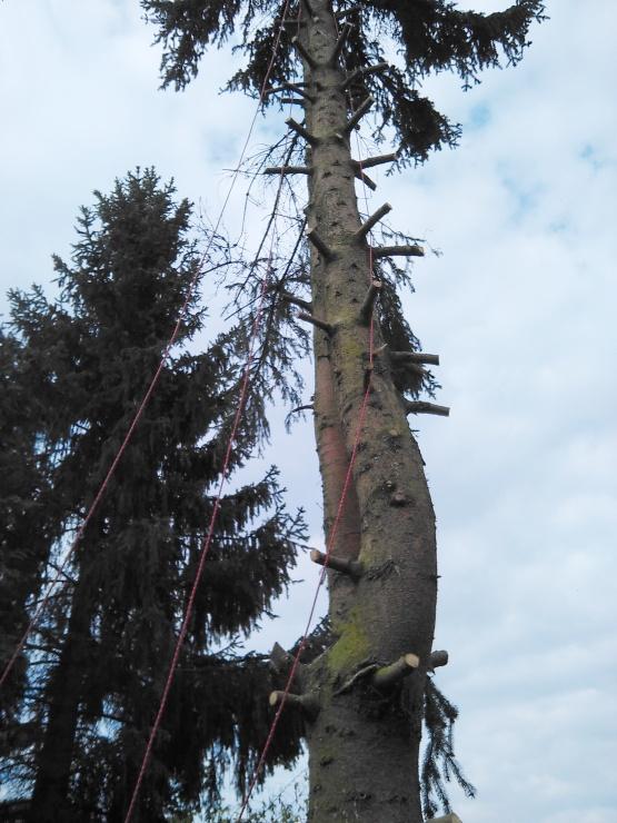 Detailní pohled na již částečně odvětvený strom