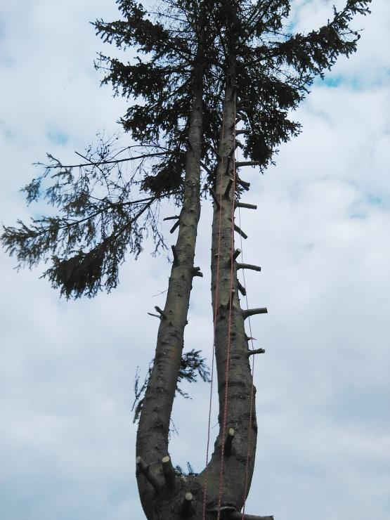 Pro zajištění lepší manipulace obsluhy s řeznými nástroji na stromě, byly pahýly větví využity jako nášlapníky