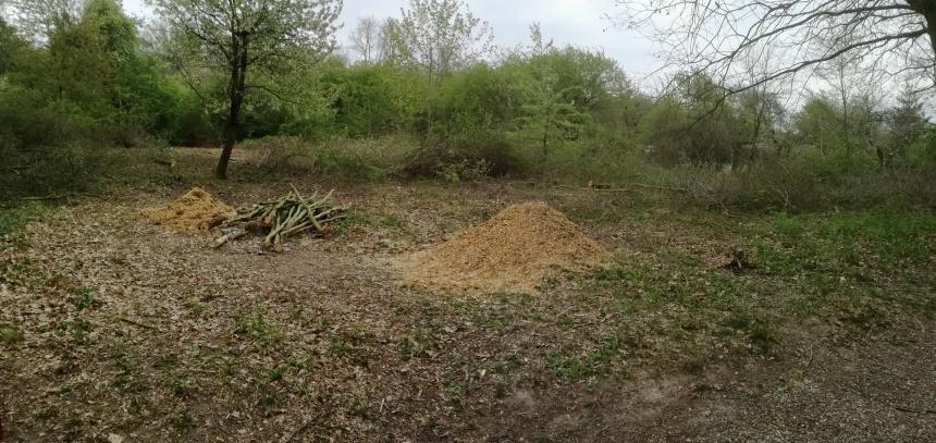 První třetina zahrady je již zbavena náletových dřevin