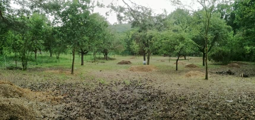 Prořezané ovocné stromy a několik doubků včetně jedné sosny které jsou na přání majitele taktéž upraveny
