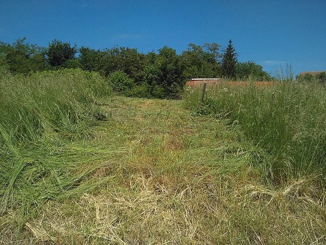 Začátek prací, tráva byla místy vysoká i přes jeden metr