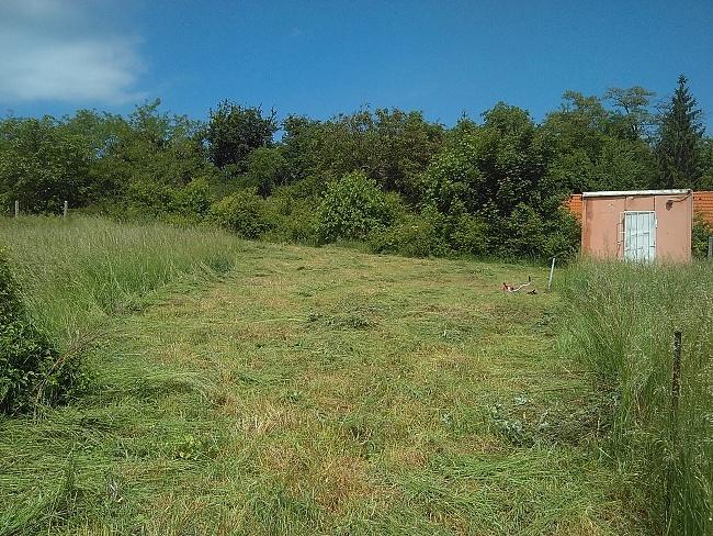 Na pozemku nebyla jen přerostlá tráva, ale i velké množství náletovin