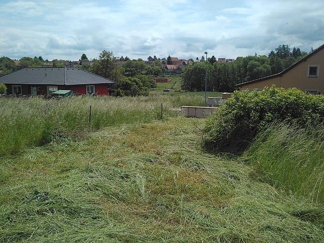 Pohled na vysokou trávu a náletoviny
