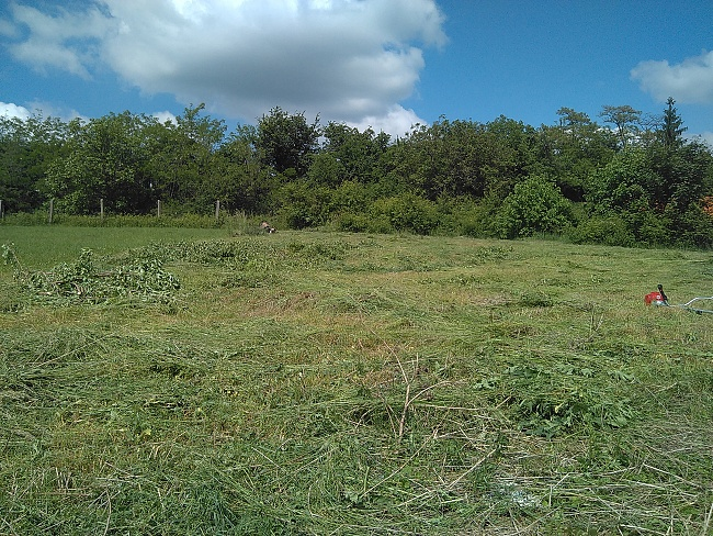 Silný křovinořez si snadno poradil s přerostlou trávou i náletovinami