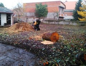 Likvidace náletových dřevin na zahradě v Kladně