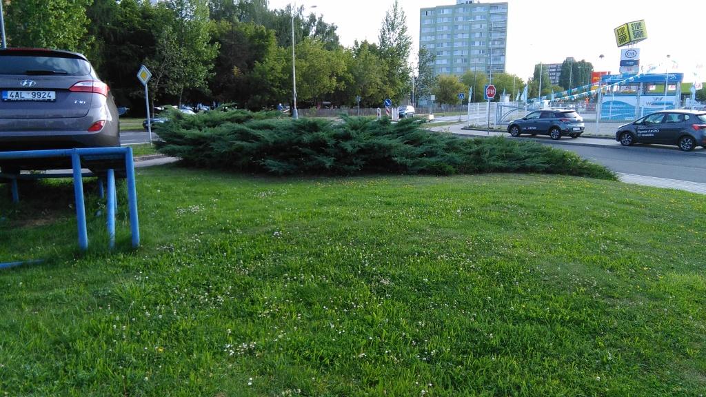 Pozemek před likvidací okrasné dřeviny