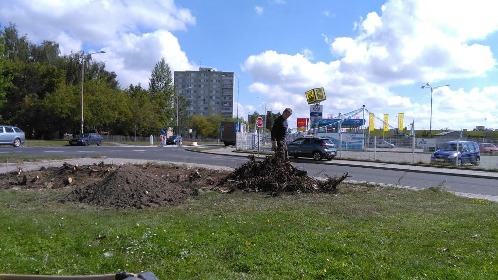 ...odstraňování pařezů a zbylých kořenů