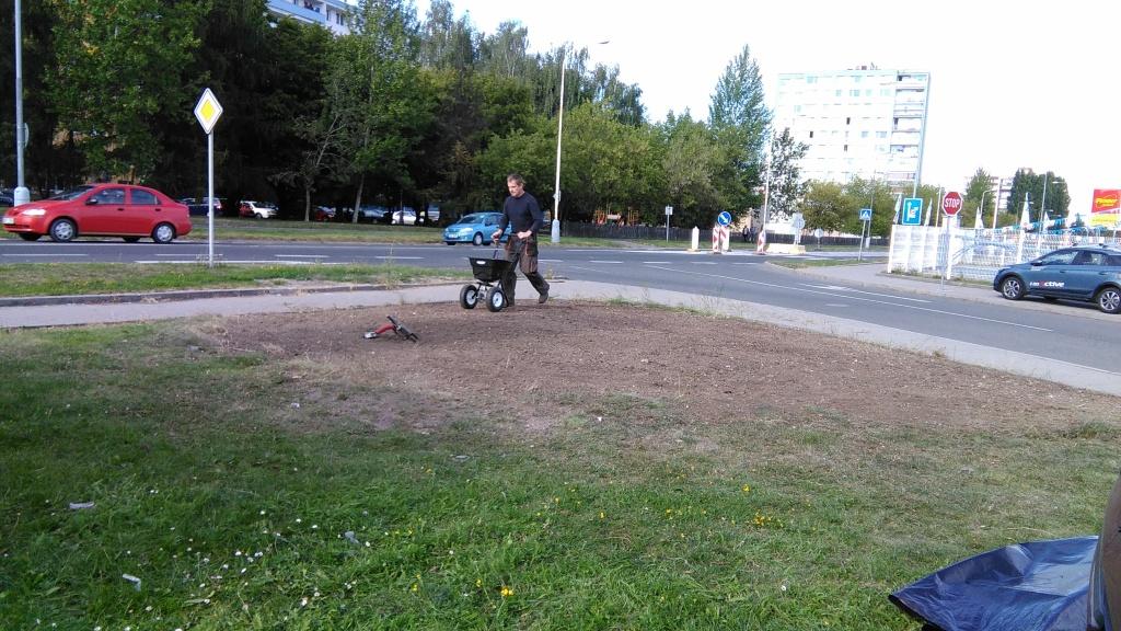 ...již probíhající výsev trávníku (dosetí holého místa po vyřezávce dřevin)