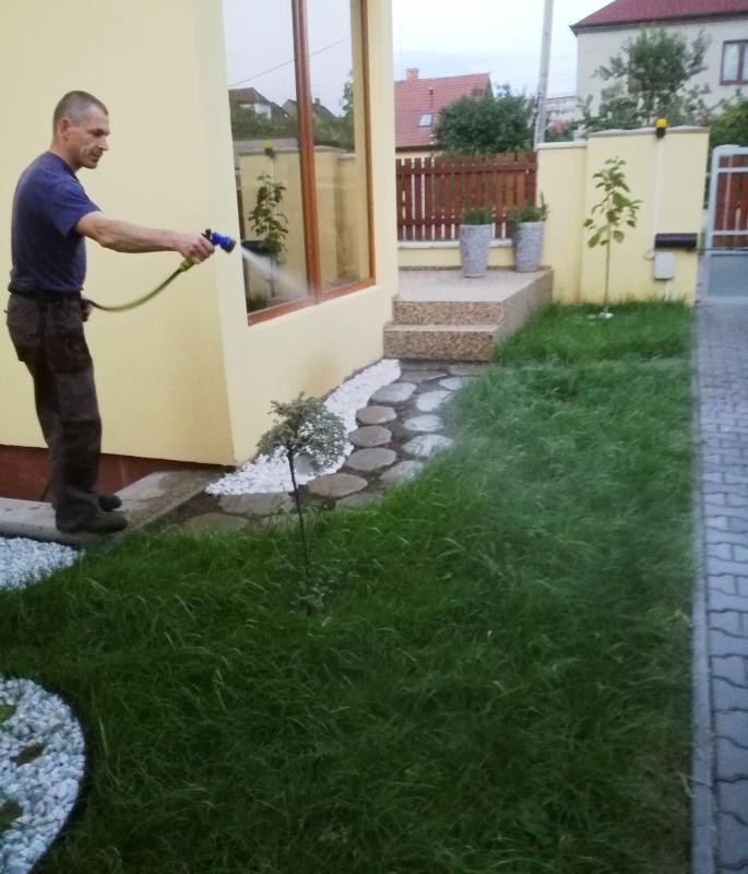 Nezbytná zálivka trávníku. Trávník pár dnů před sečí