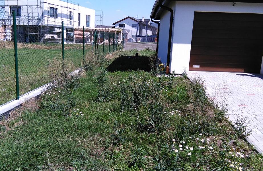 Zahrada byla plná plevele a náletu