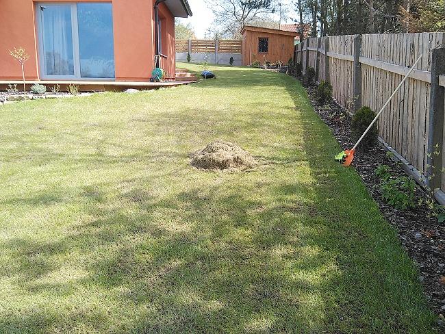 Výhrab stařiny a plsti po vertikutaci trávníku