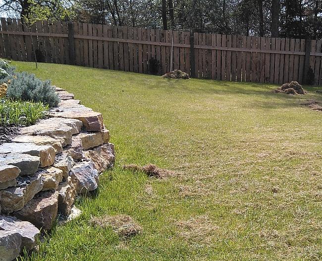 Výhrab stařiny a plsti po vertikutaci trávníku téměř u konce