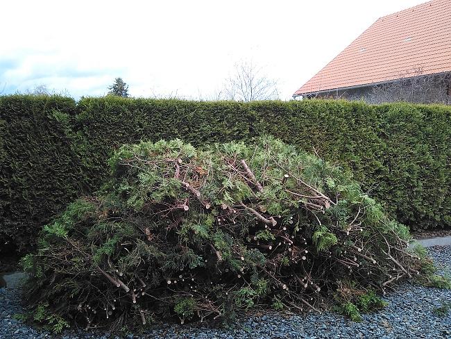 ...tato hromada je jen slabá polovina vzniklé hmoty po řezu živého plotu